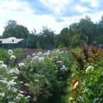 trädgård natur odling